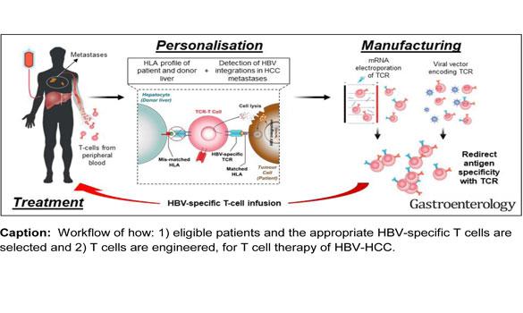 cancer hepatic virus)