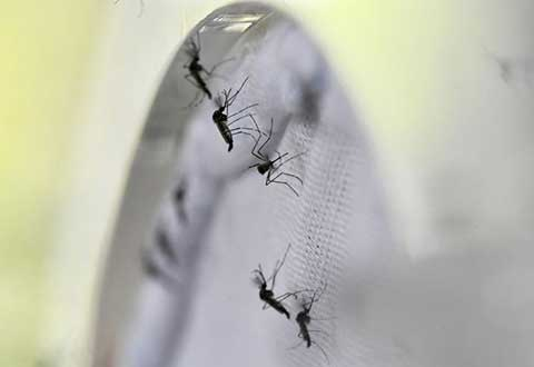 At least 50,000 former dengue patients at risk of falling severely ill as virus strain changes