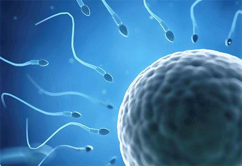 Causes of infertility IVF can treat.