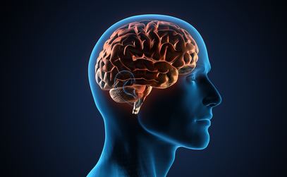 Close-up look at how omega-3 is transported to the brain